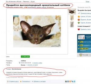 Котята, продажа