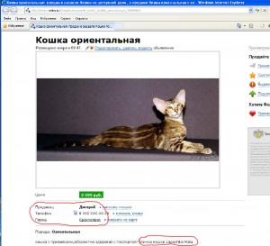Роскошная кошка, не правда ли?